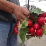 A gentleman named Jose brings me water and offers some radishes too.
